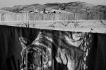 Eine Wolldecke an der Wäscheleine eines palästinensischen Hauses in Hizma, Westbank 2005  © Oded Balilty