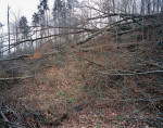 Trees in the Habsburg Forest blown down in Cyclone Lothar, Hausen b. Brugg, Switzerland (30 August 2000/26 March 2001).  © documenta natura
